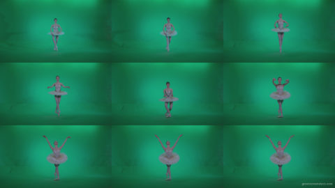 Ballet-White-Swan-s14-Green-Screen-Video-Footage Green Screen Stock