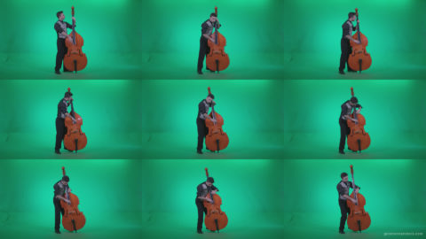 Contrabass-Jazz-Performer-j4 Green Screen Stock