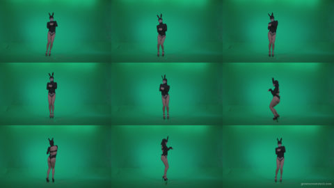 Go-go-Dancer-Black-Rabbit-u6-Green-Screen-Video-Footage Green Screen Stock