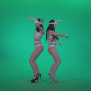 Go-go-Dancer-White-Rabbit-m5-Green-Screen-Video-Footage_006 Green Screen Stock