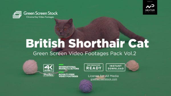 British Shorthair Cat – Green Screen Video Footage