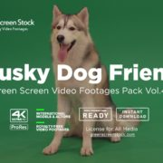 Husky Dog over green screen