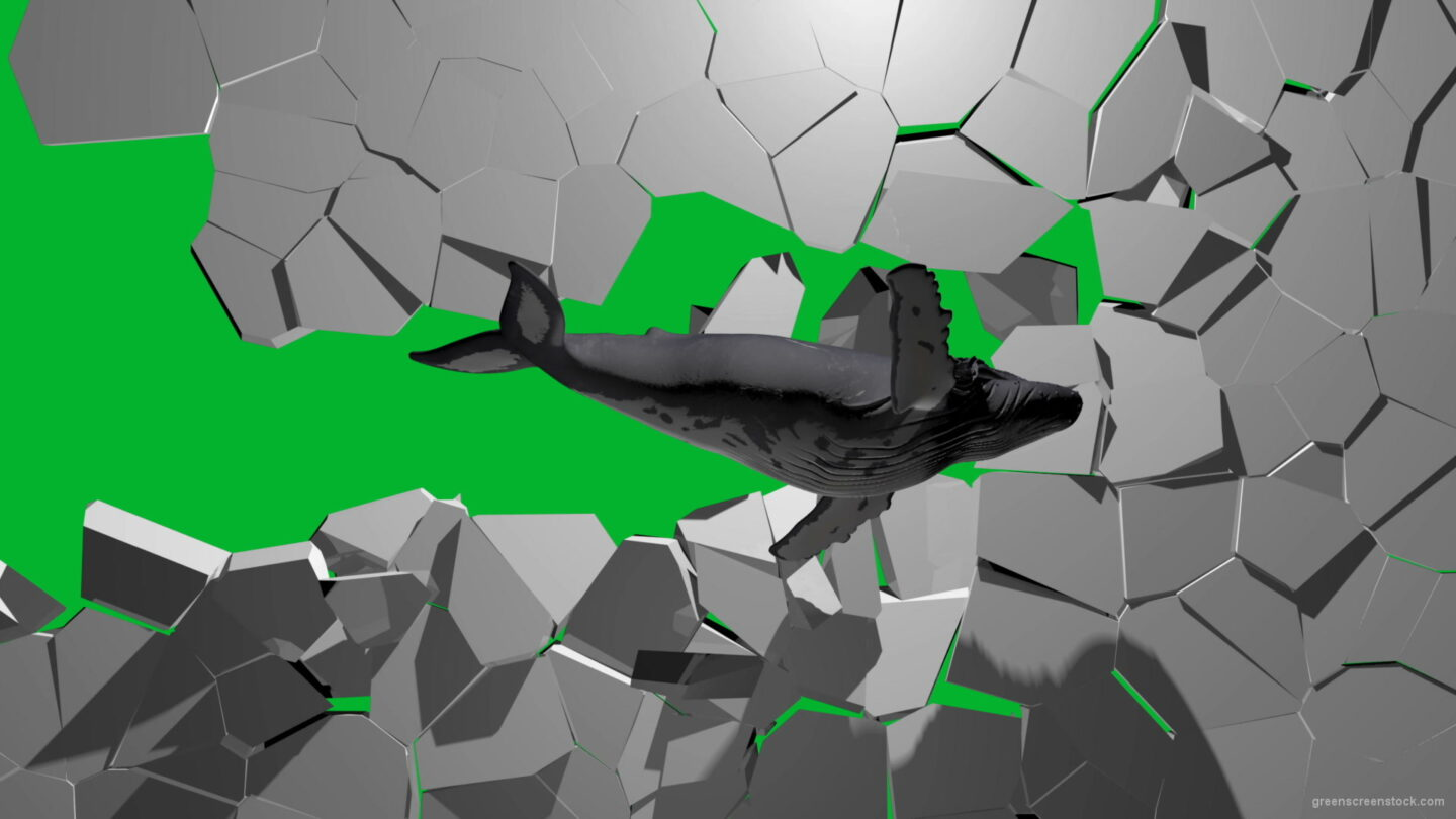 Boom-Wall-3D-Whale-Nektar-DIgital-Green-Screen-Animation_005 Green Screen Stock