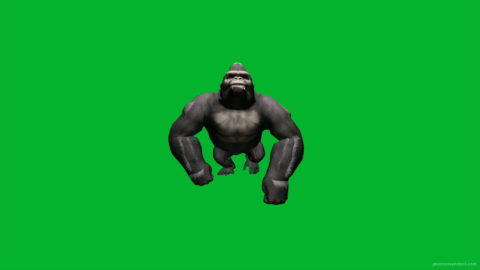 vj video background Gorilla-Move-Nektar-Digital-Green-Screen-Footage_003