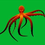 vj video background Orange-Octopus-Nektar-Digital-Footage_003