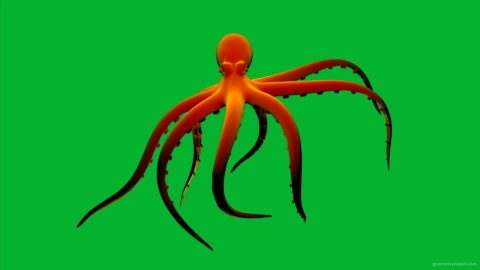 vj video background Orange-Octopus-Nektar-Digital-Footage_003