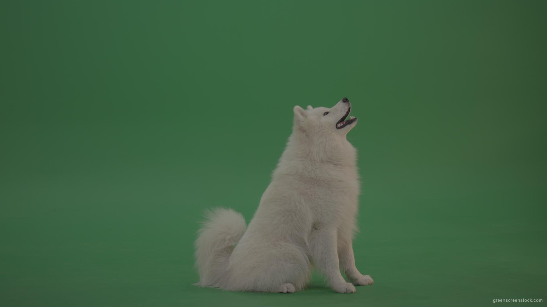 Digital Picture Image Photo Wallpaper JPEG Dog Desktop Screensaver