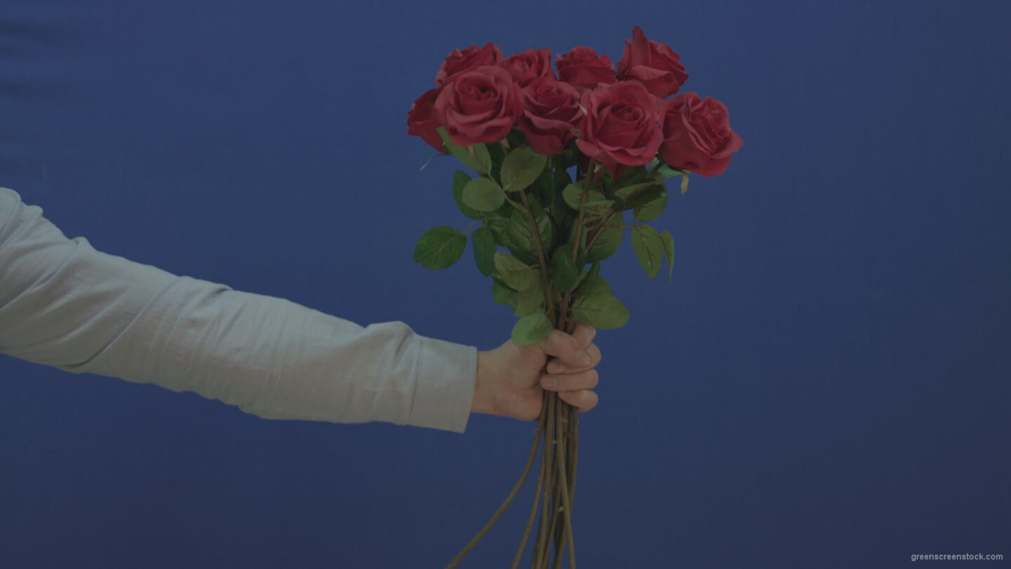 vj video background Man-hand-giving-a-bunch-set-of-red-roses-isolated-on-blue-chromakey-background_003