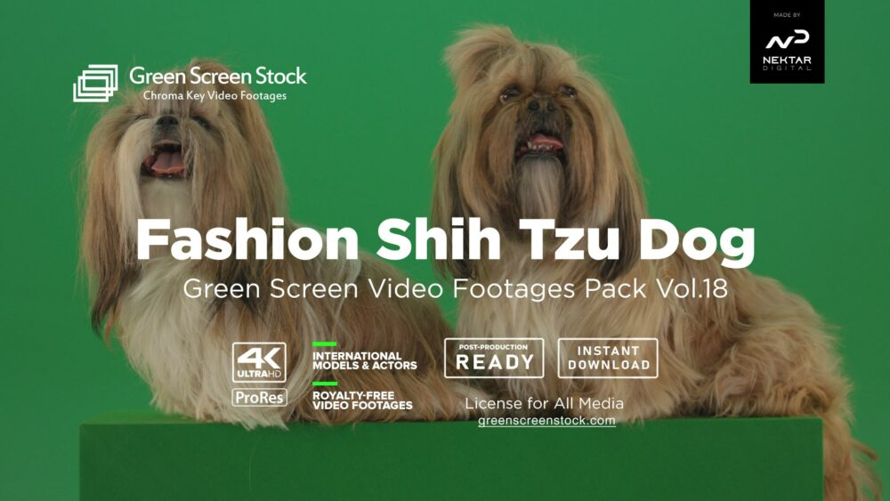 Fashion Shih Tzu Dog – Green Screen Video Footage Pack Vol.18-min
