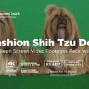 Fashion Shih Tzu Dog – Green Screen Video Footage Pack Vol.18-min