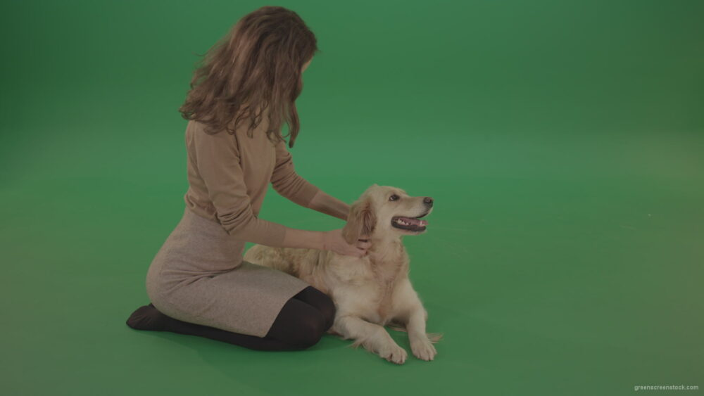 vj video background Young-Girl-stroke-the-dog-golden-retriever-big-puppy-isolated-on-green-screen-background_003