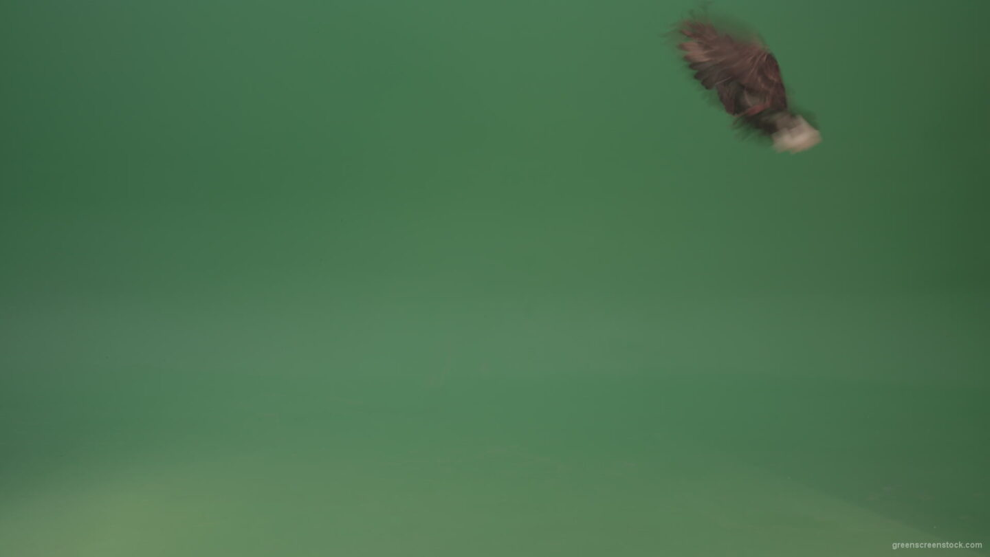 vj video background Bird-of-the-pigeon-flies-and-lands-on-the-ground-isolated-on-green-background_003