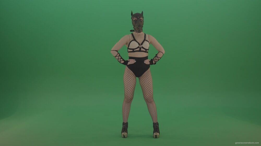 vj video background Erotic-girl-in-wolf-dog-sexy-fetish-mask-posing-on-green-screen_003