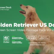 Golden Retriever Dog Green Screen Video Footage Pack